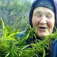 В Харькове старушка выращивала плантацию конопли